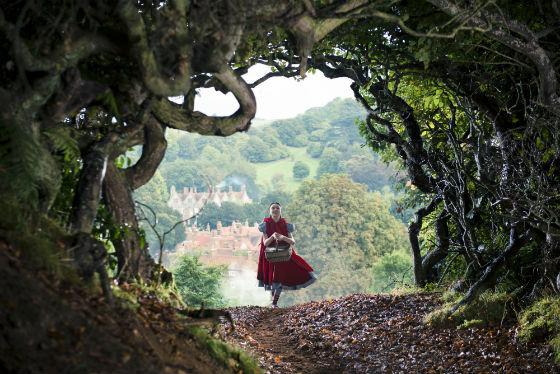 Caminhos da Floresta - Fotografia