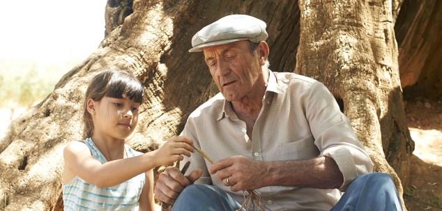 a-oliveira-do-meu-avo
