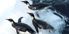 A Marcha dos Pinguins 2 leva o espectador ao mundo dos pinguins explorado na sua prequela, agora com mais detalhes e novas filmagens.