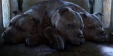 Apesar no nome nada intimidante, Fluffy o cão de três cabeças, ainda pregou uns bons sustos a Harry Potter, Hermione e Ron.