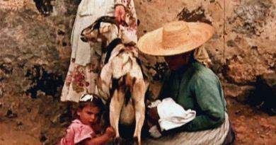 indielisboa de los nombres de las cabras critica