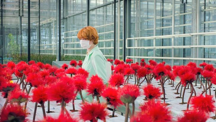 a flor da felicidade critica leffest